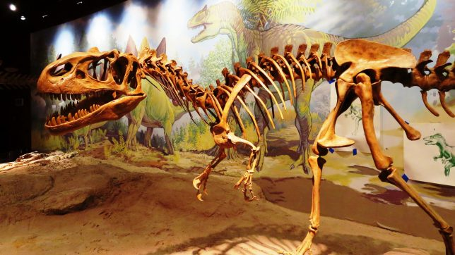 Check Out the Utah Field House of Natural History State Park Museum